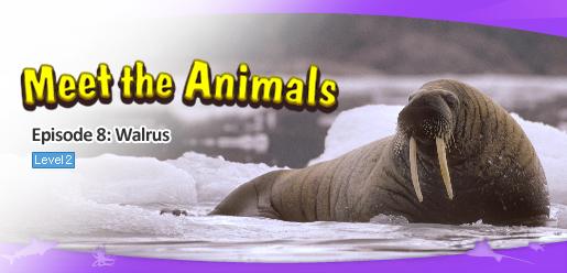 Meet the Animals 8