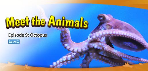 Meet the Animals 9