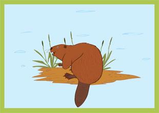 The Clean Beaver