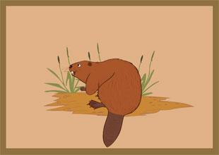 The Carpenter Beaver