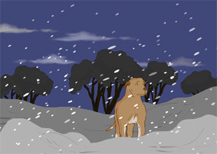 A Dog of Flanders 15: Christmas Eve