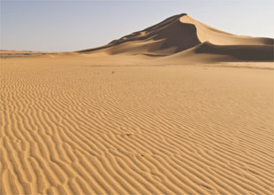 The Sahara: Adapting in the Desert