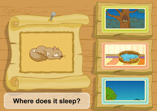4. Where Does it Sleep?