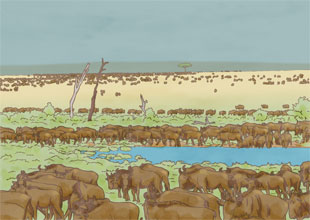 16. The Serengeti