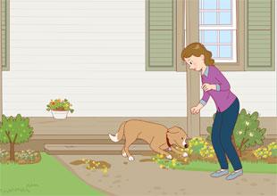 The Carter Family 8: Good Dog, Rover!