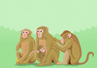 Where Am I? 20: I See Monkeys