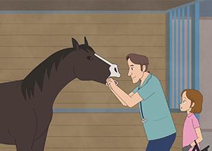 The Horse Vet